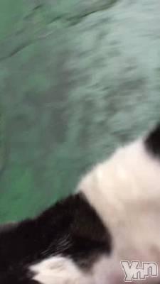 甲府ソープ BARUBORA(バルボラ) こゆき(ヒミツ)の1月19日動画「しゃべっちゃった!」